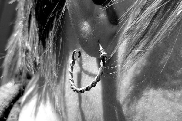 Twisted Silver Hoops worn by a model with short hair, close up black and white image. Blackened silver Celtic style ear hoops
